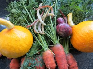 Carrot's, pumpkins, onions and blue Jay beans