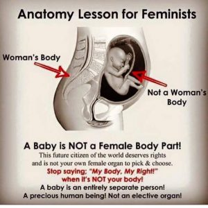 anatomy lesson for feminists